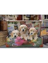 Cachorros en el equipaje...