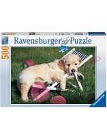 Puzzle Golden Retriever 500 piezas